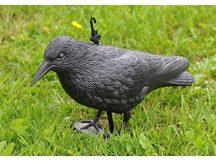 Galambijesztő varjú - Távol tartja a madarakat!