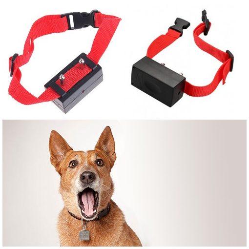 Kutyanevelő nyakörv